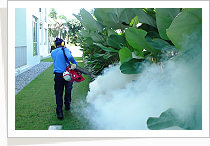 Pest Control Services - Fogging